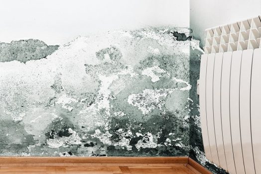 Check The Property With Damp And Timber Report Before Investing